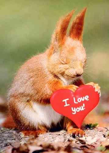 Postkarte - Herzhörnchen  -