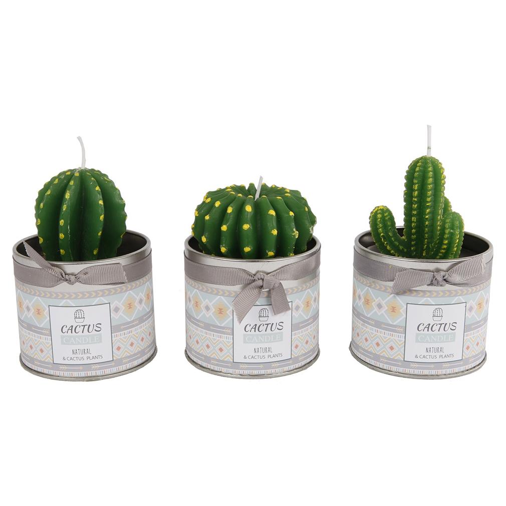 3er Set Kaktuskerze Kerze Natur grün Dose